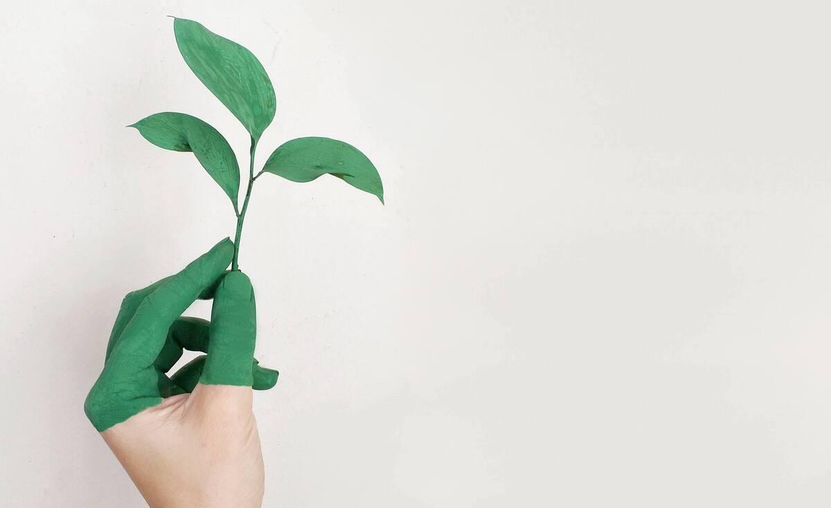 Greenwashing o sostenibilità: quanto le aziende sono davvero attente all'ambiente